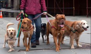 Чем грозит новый закон владельцам собак