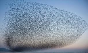 Тысячи птиц разных видов таинственно исчезли с Флоридского полуострова. Ученые ждут беды