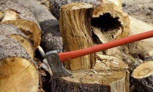 Командиры Нацгвардии Украины украли дров на десятки тысяч долларов