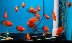 """""""Подводные камни"""", на которые натыкается начинающий аквариумист"""