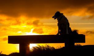 Елена Типикина: Чем больше я узнаю собак, тем больше люблю людей