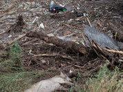 В Тбилиси отстреливают хищников, сбежавших из зоопарка после затопления