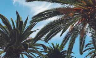 Семь идей, чем заняться в Майами