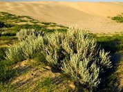Растения поливают почву, спасая бактерий