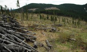 Полпред президента РФ предложил мониторить вырубку леса из космоса