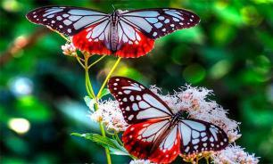 Бабочки – это не только красиво, но и прибыльно