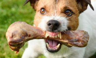 Четыре причины, по которым рычит собака