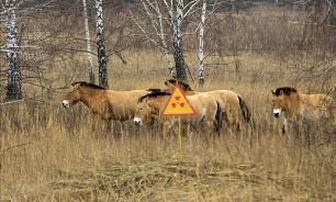 Тишь и благодать: хищники-альбиносы захватили Чернобыль