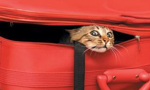 Переезд с кошкой: как его организовать