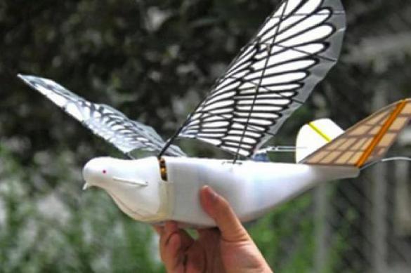 Для массовой слежки в КНР запущены искусственные голуби
