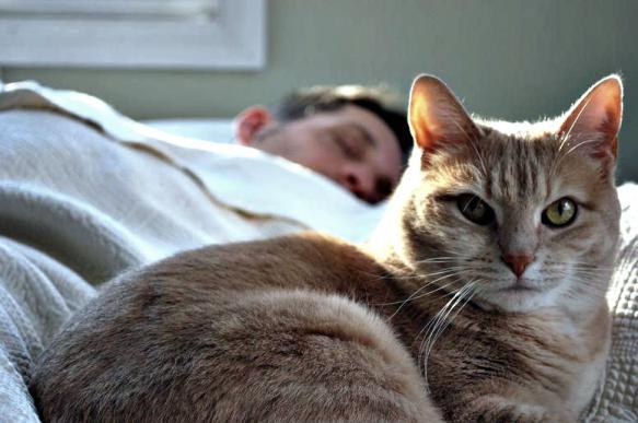 Кошки спят на своих хозяевах в целях безопасности - ученые