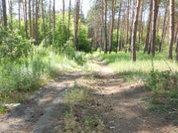 Ульяновская область как лидер по заботе о природе