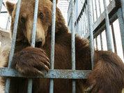 Детей оградят от медведей, удавов и макак