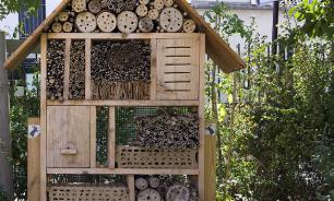 Для московских насекомых построят гостиницы