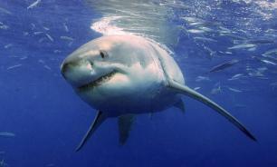 Китаянка выжила после падения в аквариум к акулам