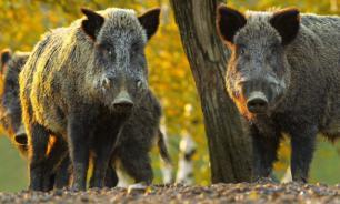 Дикие предки домашних животных. Вторые три пары
