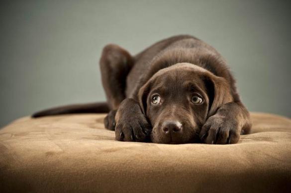 Страх перед грозой – как отучить собаку бояться