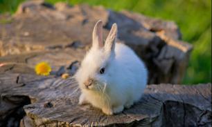 Как вырастить здорового кролика?