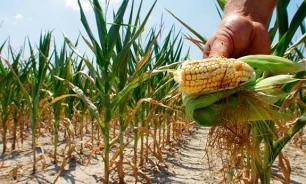 Мир может оказаться на грани голода через 40 лет - ученые