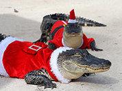 Рождество: Самые глупые преступления