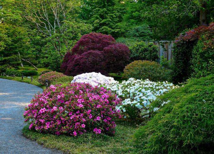 Декоративные кустарники для выращивания в тени