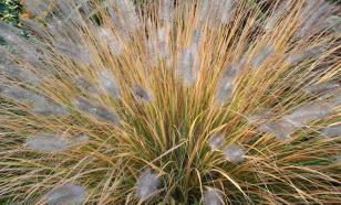 Пять причин посадить декоративные травы в своем саду