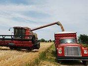 Российские крестьяне стали переквалифицироваться в фермеров