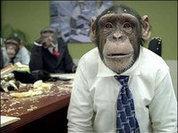 Шимпанзе бывают коварными, как и люди