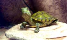 Что необходимо черепахе, которая живет в квартире?