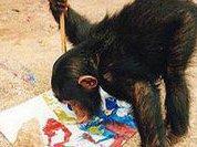 Шимпанзе более разумны, чем кажутся