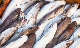 Прибыль рыболовной отрасли за 2015 год возросла почти втрое
