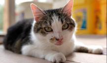 Кот Борис, вцепившийся в батон, стал звездой Интернета. ВИДЕО