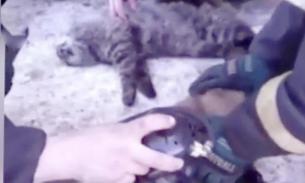 Спасателей Магадана наградили за реанимацию котов