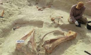 На Аравийском полуострове нашли останки древнего гигантского слона