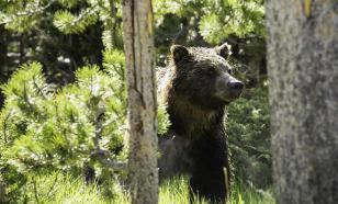 Пенсионер победил медведя голыми руками