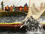"""Норвегия """"отжимает"""" российскую рыбу"""
