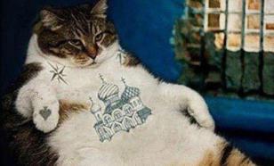 5 млн рублей за кота просит кемеровчанин