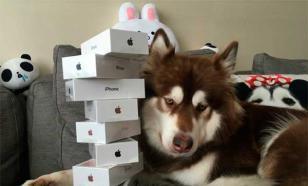 Собаки  - олигархи и царствующие особы