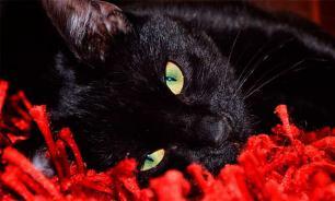 Чем страшна черная кошка?