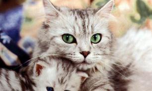 В некоторых районах Москвы начали массово умирать кошки