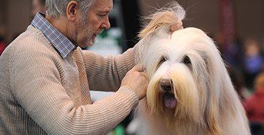 Crufts Dog Show - самый главный праздник для собак и их владельцев