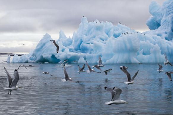 Птицы Арктики начали приспосабливаться к изменению климата