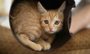 В России разрабатывается вакцина от аллергии на кошек