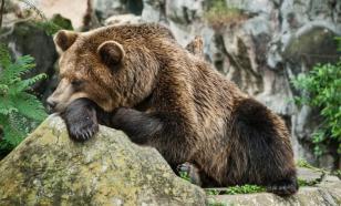 Мельница мифов: сказки о русском медведе