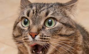 Кошки тоже впадают в маразм