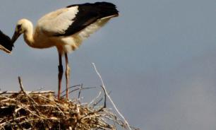 Птицы помогли ученым раскрыть секрет любви