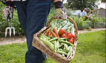 Готовьтесь, россияне: Госдума резко поменяет жизнь дачников и садоводов