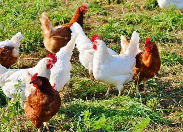 Секреты пернатого мира: интересные факты о птицах
