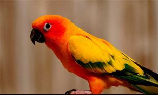 """Любители """"задушевных"""" бесед выбирают попугаев"""