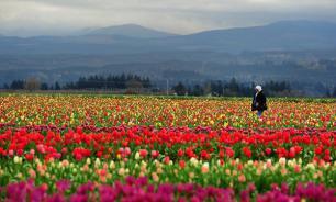 Амстердам намерен увеличить объемы реэкспорта цветов на российский рынок